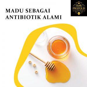 Madu sebagai antibiotik alami